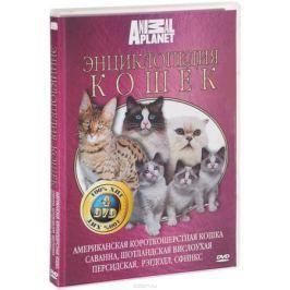 Discovery: Все о кошках (4 DVD)